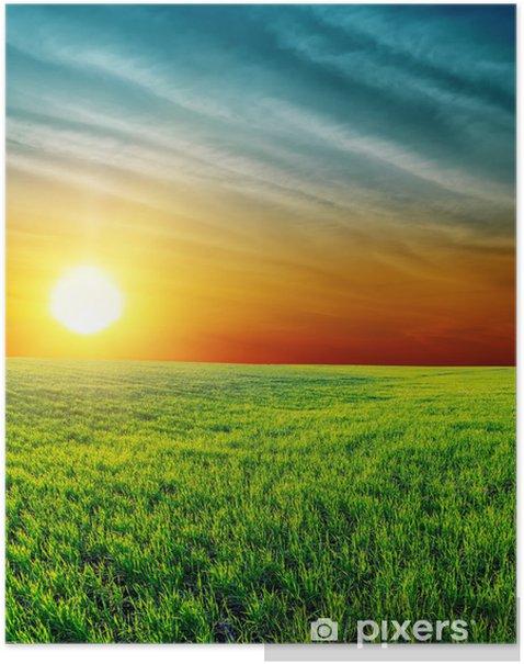 Poster Bon coucher de soleil sur l'herbe verte - Agriculture