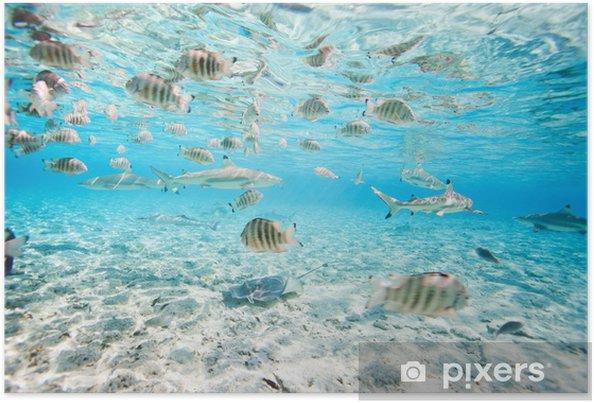 Poster Bora Bora onderwater - Vis