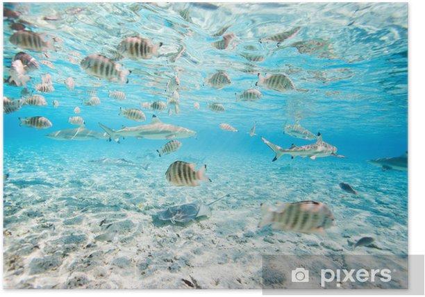 Bora Bora underwater Poster - Fishes