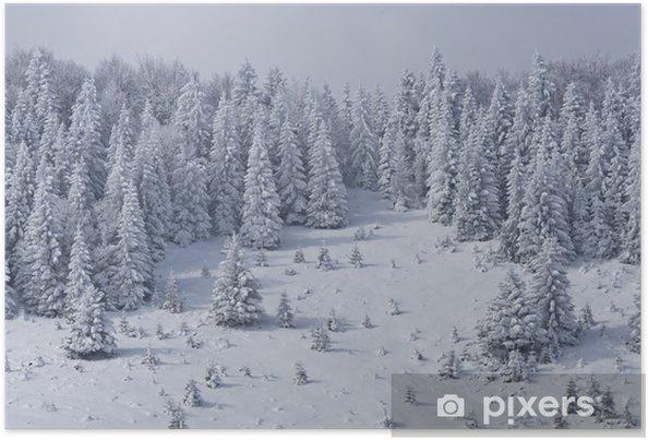 Póster Bosque de pinos en invierno - Montañas