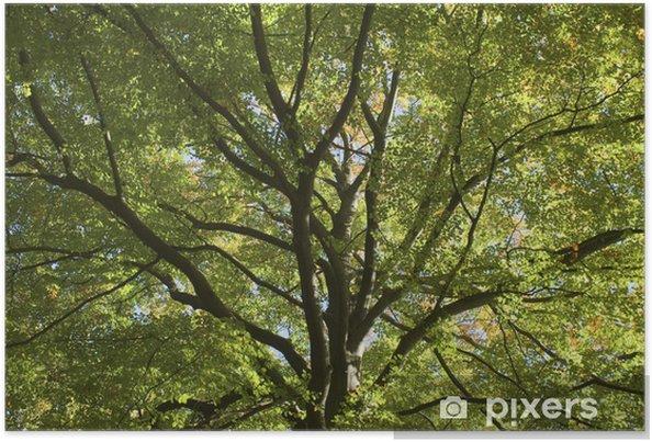 Póster Bosque, otoño, Toldo, hojas, caída, árbol, - Estaciones