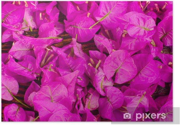 Póster Bougainvillea flores - Fondos