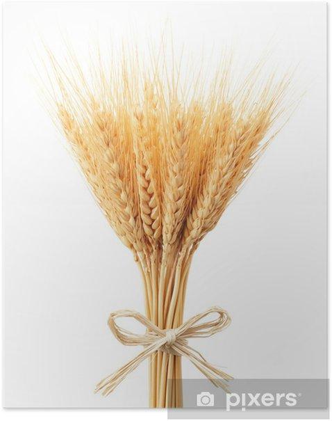 Poster Bouquet d'épis de blé - Graines et céréales