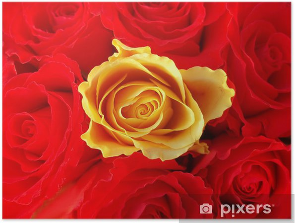 Poster Bouquet de roses rouges avec un autre jaune unique - Bonheur