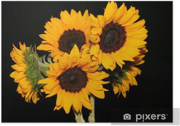 Poster Bouquet de tournesols sur fond noir - Thèmes