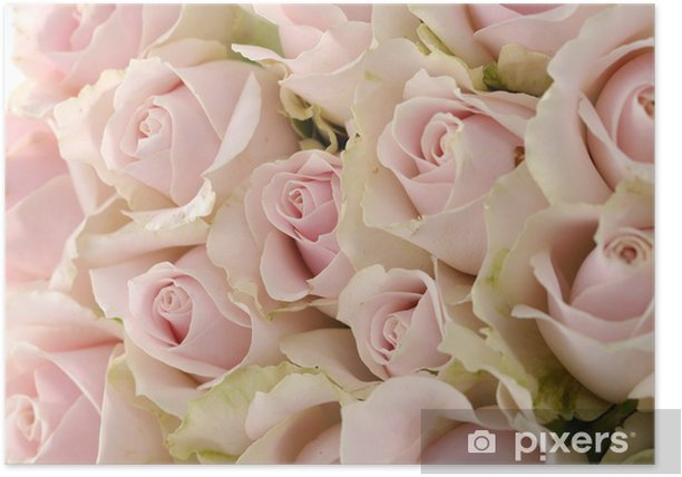 bouquet of roses Poster - Flowers