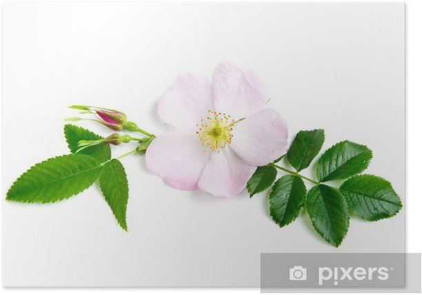 Briar Poster - Flowers