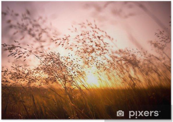 Poster Brins d'herbe séchés par le soleil - Thèmes