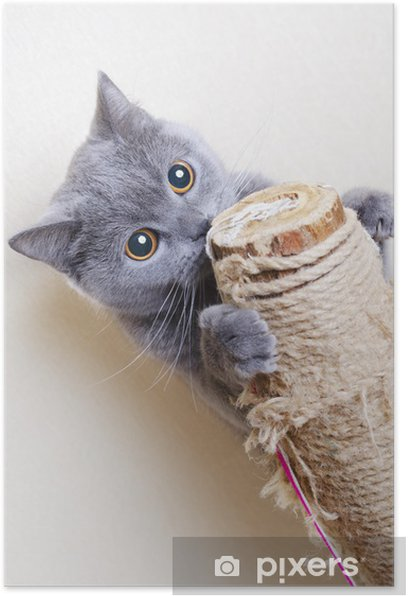 British cat scratching posts Poster - Themes