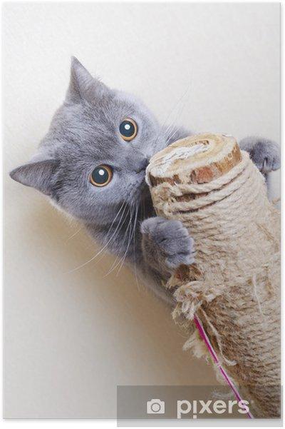 Poster Britse kat krabpalen - Thema's