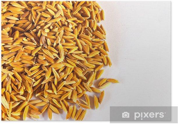 Poster Brown riz paddy isolé sur blanc. - Repas