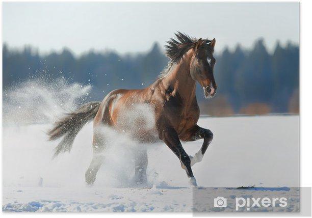 Poster Bruin paard loopt in de winterlandschap - Thema's