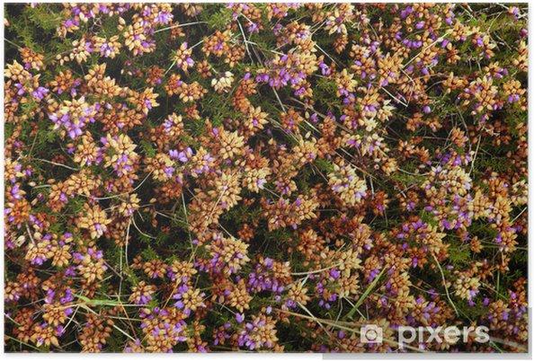 Poster Bruyère de couleurs - Fleurs