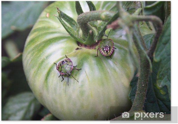 Poster Bug vert - quelques bugs tomate - Autres Autres