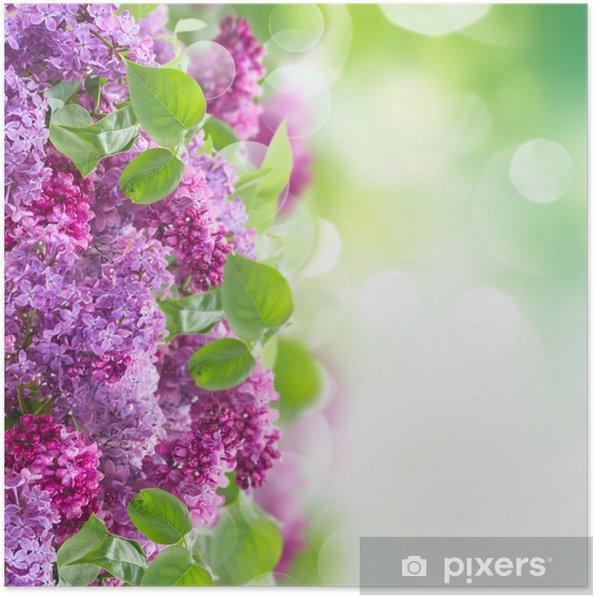 Poster Buisson de lilas - Fleurs