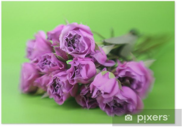 Bunch of roses with special effect focus Poster - Home and Garden
