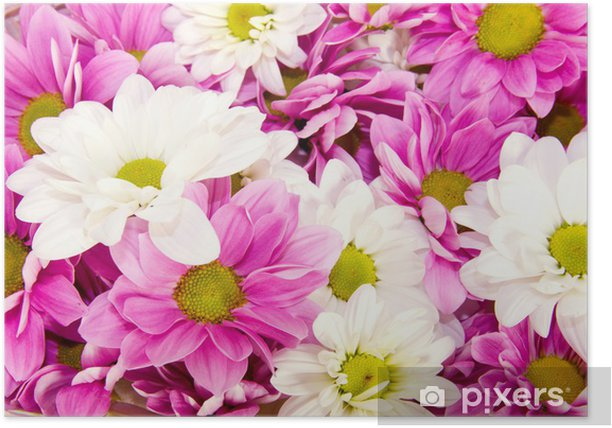 bunch of spring flowers Poster - Themes