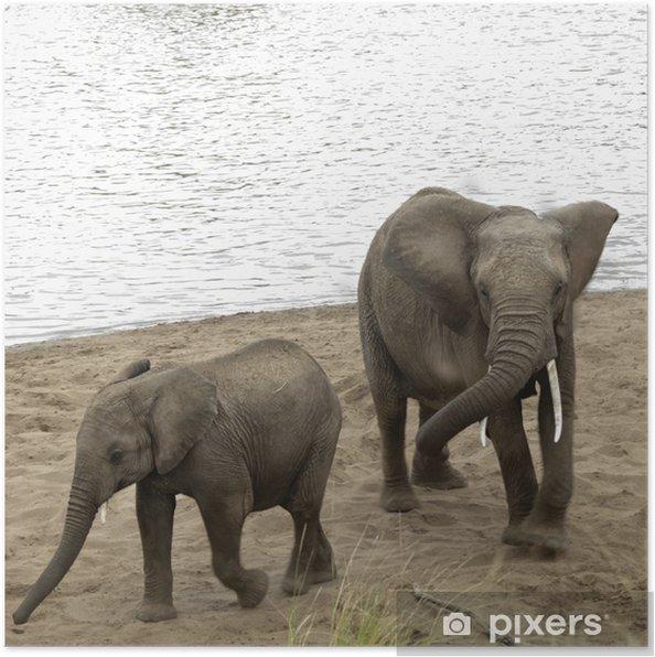 Poster Bush éléphants africains prennent un bain de sable sur la plage de Mara Riv - Thèmes