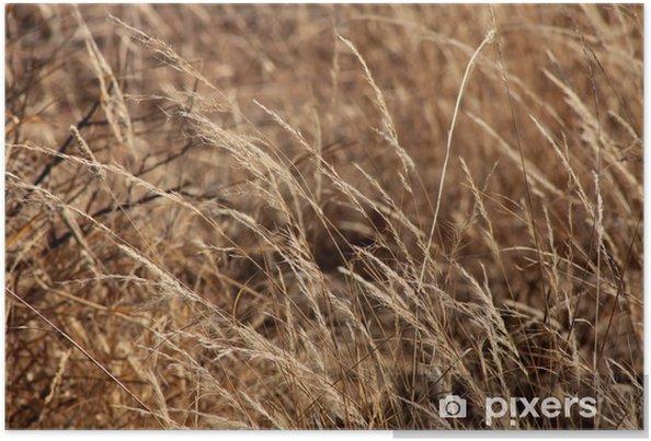 Poster Bushveld Herbe - Nature et régions sauvages