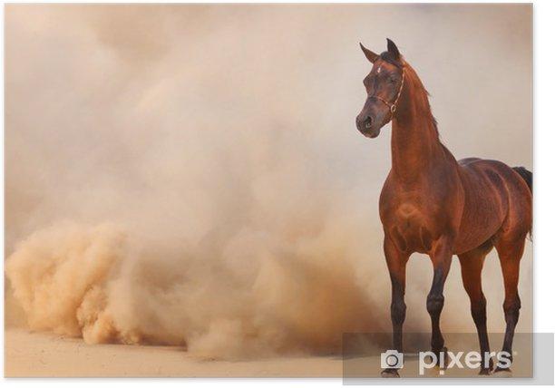 Póster Caballo árabe corriendo de la Tormenta del Desierto - Desiertos