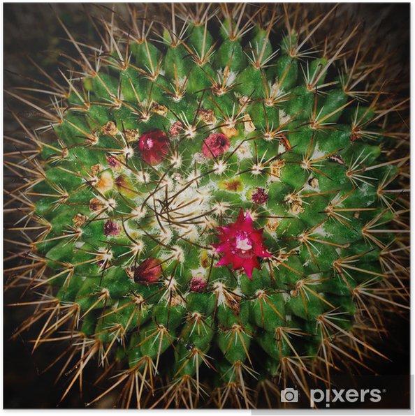 Poster Cactus Avec Fleur Rouge Macro Rose Pixers Nous Vivons