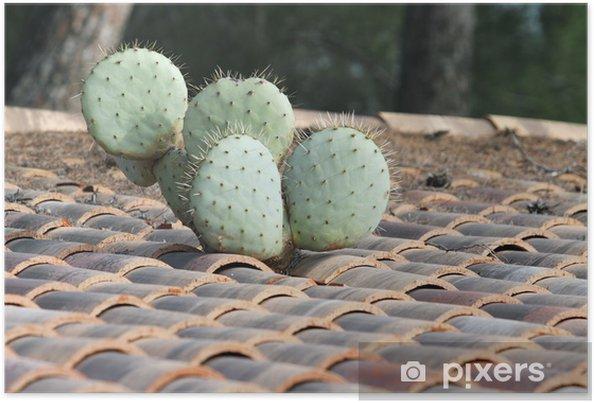 Poster Cactus de toit - Plantes