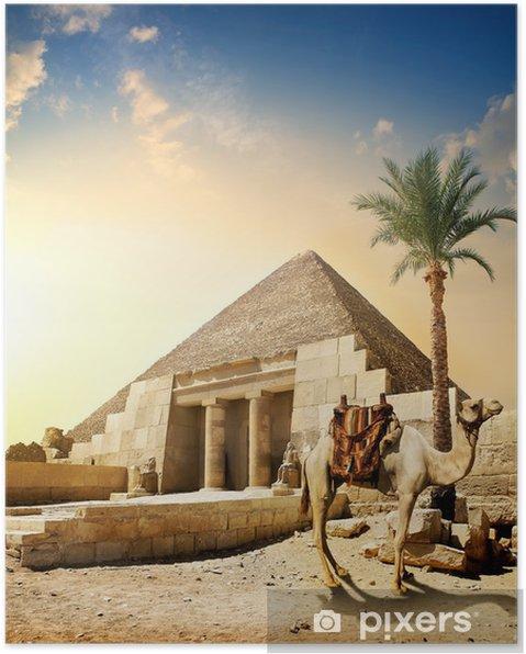 Poster Camel près de la pyramide - Monuments