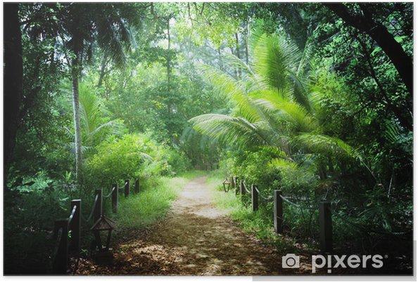 Póster Camino en la selva de las islas Seychelles - Naturaleza