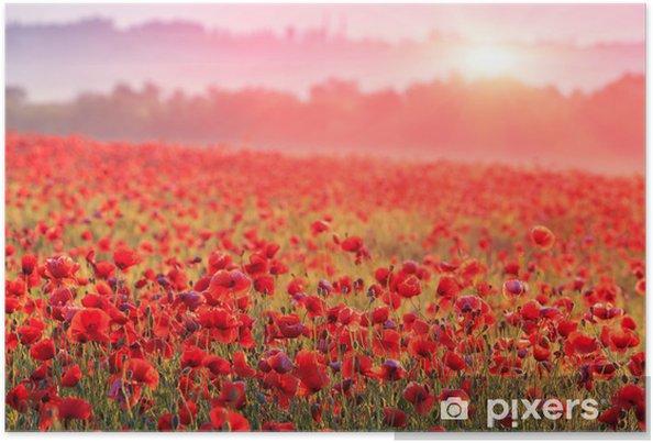 Póster Campo de amapolas rojas en niebla de la mañana - Prados, campos y hierbas