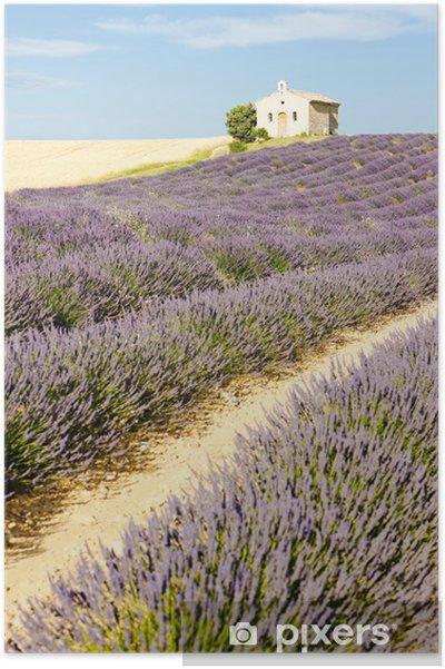 Póster Capilla con campo de lavanda, Plateau de Valensole, Provence, Fran - Europa