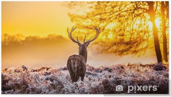 Poster Cerfs rouges dans le soleil du matin - Thèmes