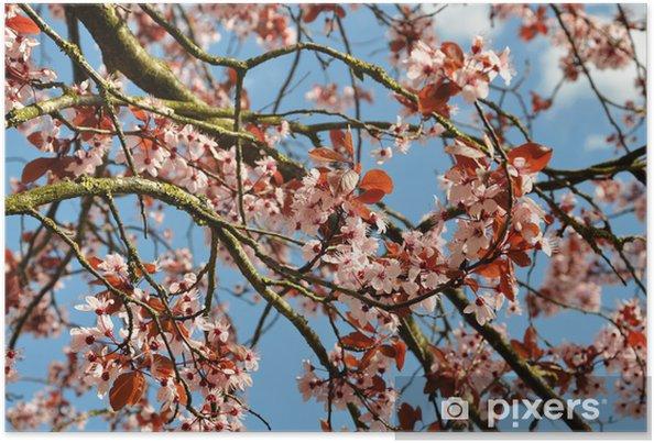 Poster Cerisier en fleur - Thèmes