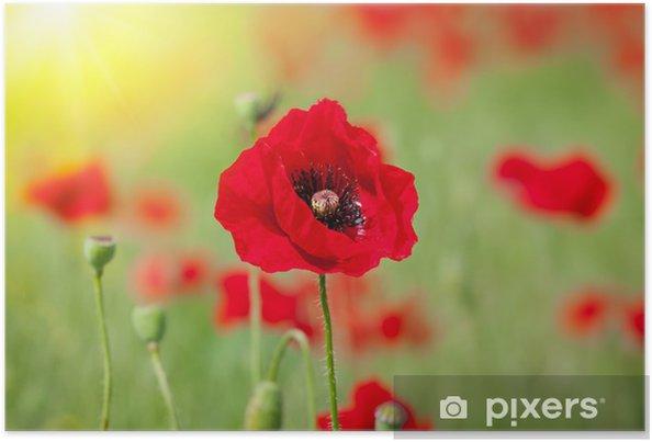 Poster Champ de maïs pavot fleurs - Fleurs