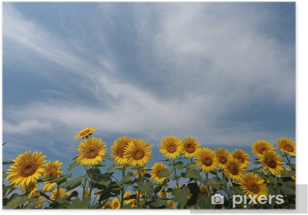 Poster Champ de plateau de tournesol - Fleurs