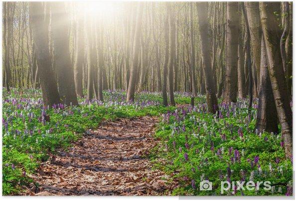 Poster Champs de floraison de fleurs dans la forêt au printemps - Forêt
