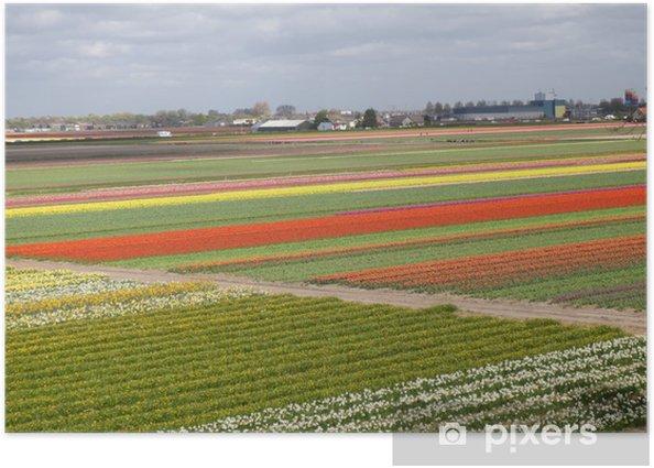 Poster Champs de tulipe - Villes européennes