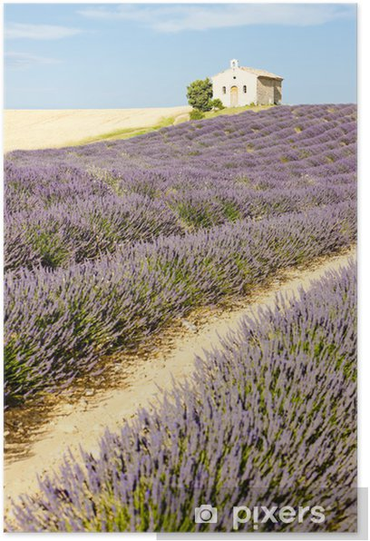 chapel with lavender field, Plateau de Valensole, Provence, Fran Poster - Europe