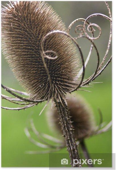 Poster Chardon - mauvaises herbes - nature - autocollants - Plantes