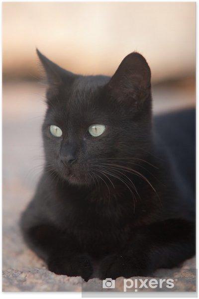 Poster Chat noir - Thèmes