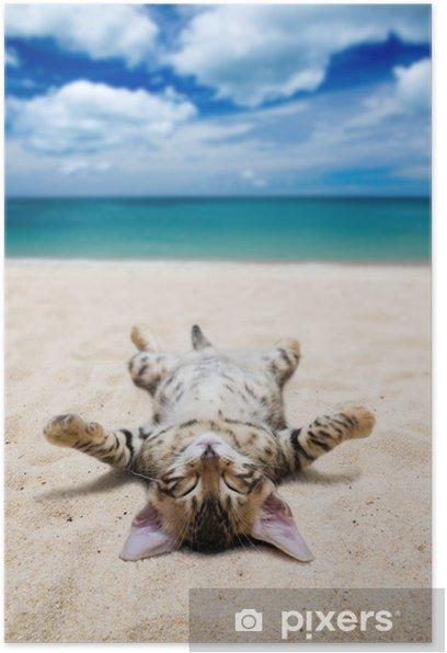 Poster Chat sur la plage - Thèmes