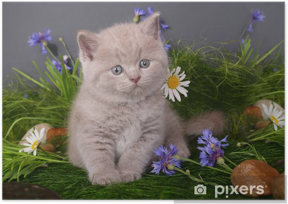 Poster Chaton dans les fleurs sur un fond noir - Thèmes