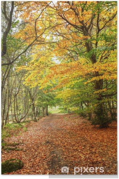 Poster Chemin à travers automne automne paysage de forêt colorée - Arbres
