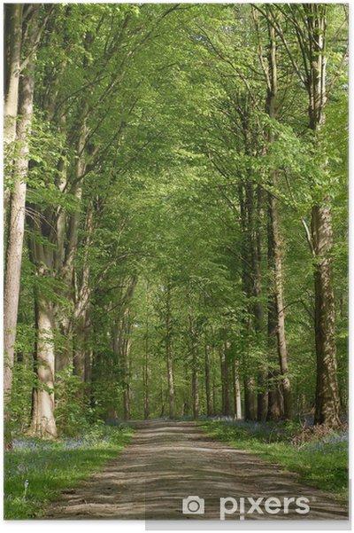 Poster Chemin dans foret - Arbres