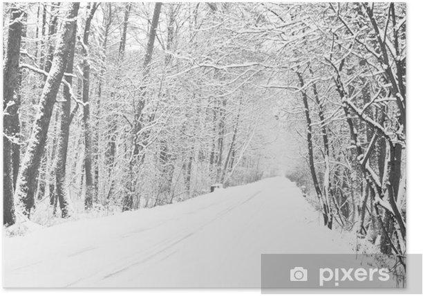 Poster Chemin dans les bois en hiver - Nature et régions sauvages