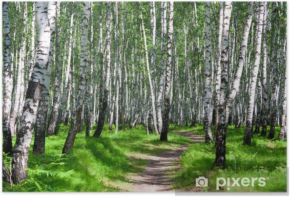 Poster Chemin dans une forêt de bouleaux - Destin