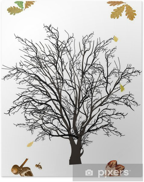 Poster Chêne nue isolé sur blanc - Arbres