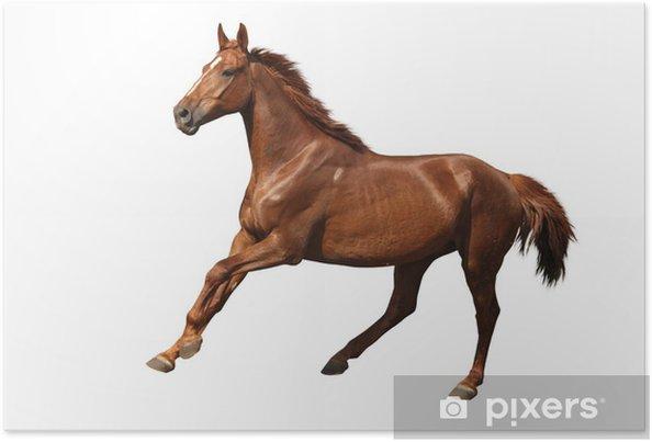 Poster Cheval brun galop libre isolé sur blanc - Sticker mural