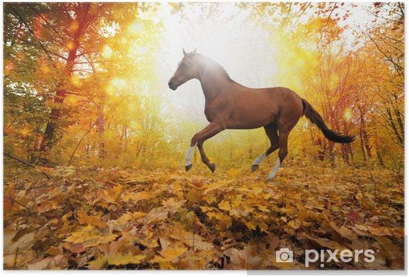 Poster Cheval dans le parc de l'automne - Thèmes