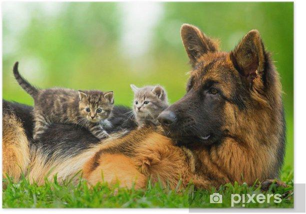 Poster Chien de berger allemand avec deux petits chatons - Thèmes