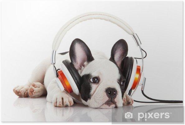 Poster Chien écouter de la musique avec un casque isolé sur blanc backgro - Thèmes